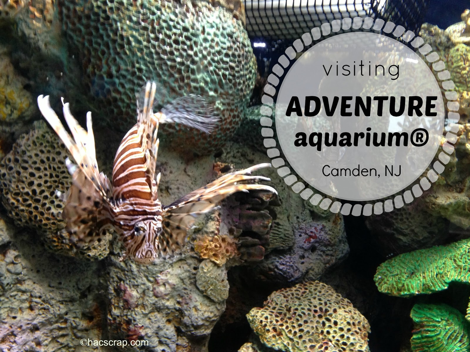 My Scraps Where To Go In Nj Adventure Aquarium In Camden Nj