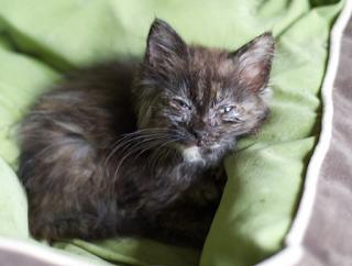 2 Penyebab kucing menjadi pendiam dan cara mengatasinya