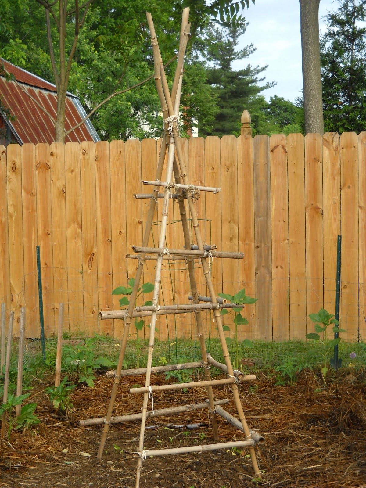 A diva 39 s garden building a teepee trellis for kids - Building trellises property ...
