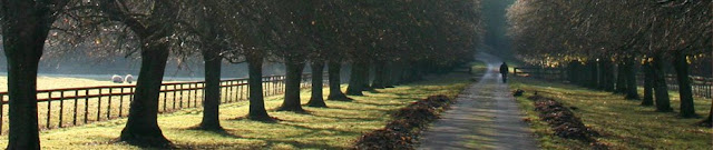 a tree lined path with a person walking in the distance