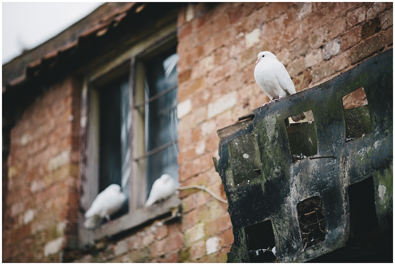 Doves sitting outside the barn