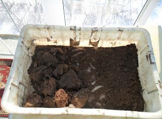 Торф для грунта под баклажаны