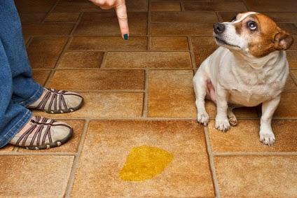Hund bestrafen