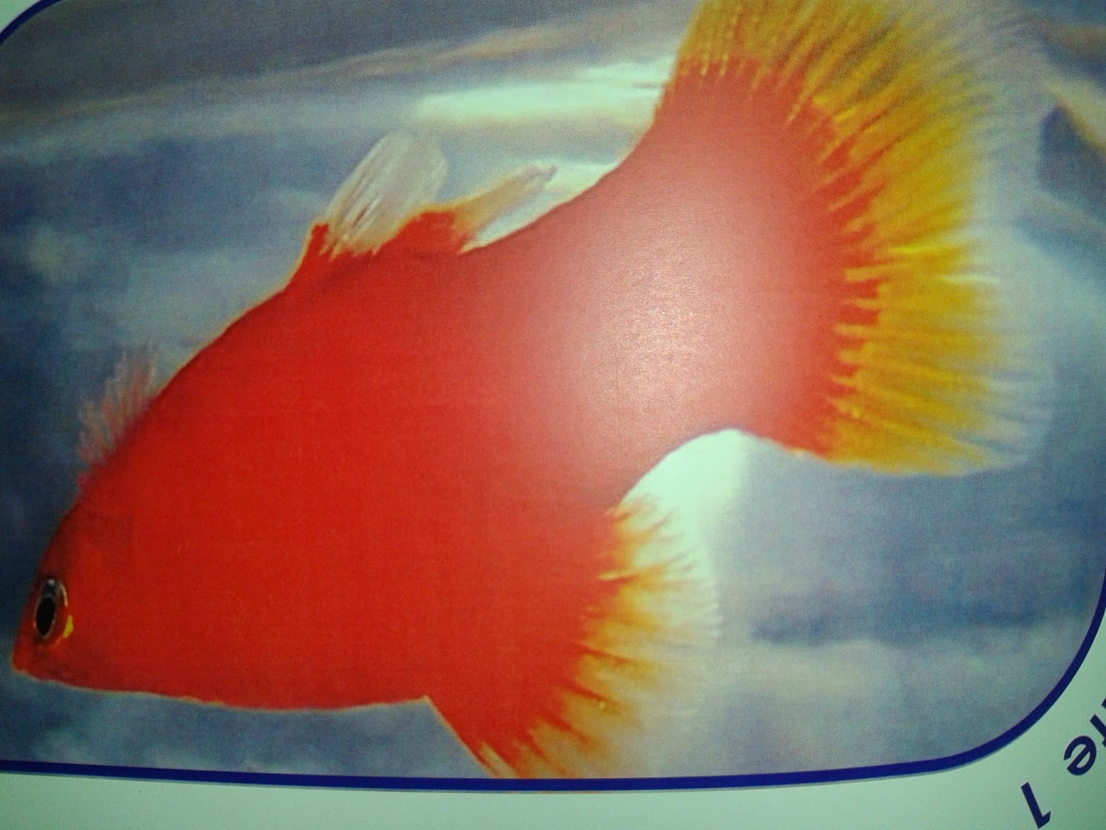 Find how to Make Money. Search Money.Online Earnings: Platy fish ...