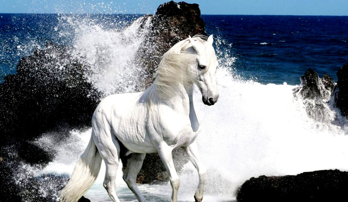 White Horse And Waves Seeside Hd Wallpaper  Sharpening