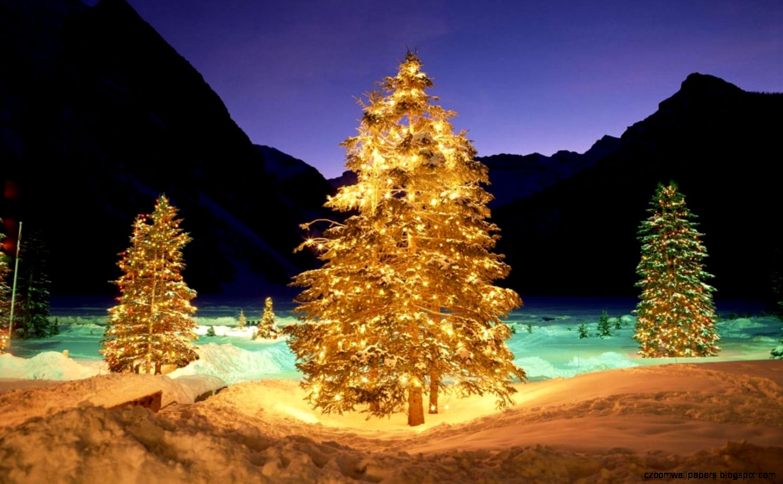 Christmas Tree 1920 X 1080