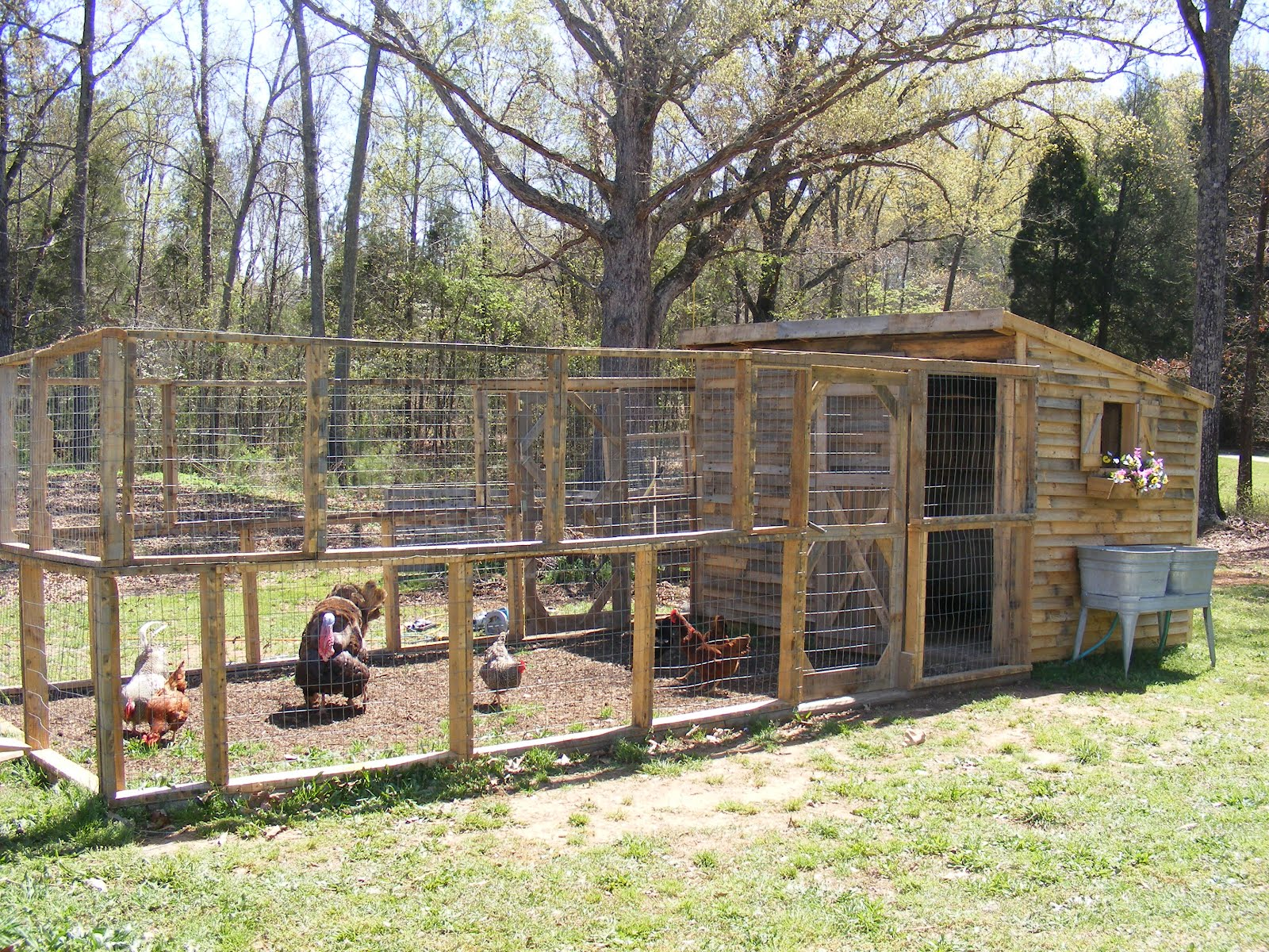 Reederbunch the coop for Pallet chicken coup