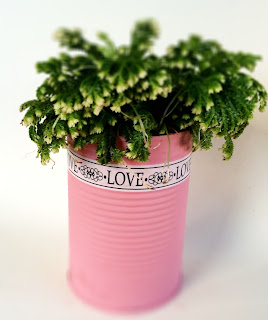 Plant pot made from an upcycled tin