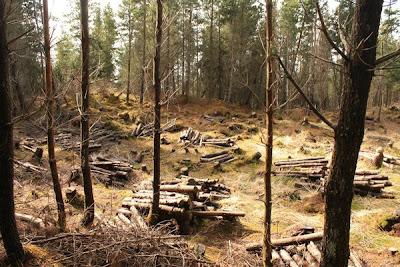 Log, Forest, Free, Liberdade, Floresta,