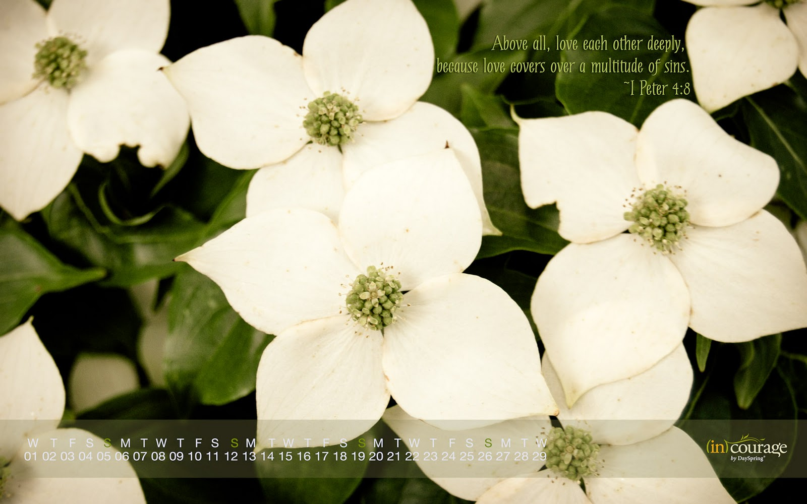 http://3.bp.blogspot.com/-Ha2zwFFq-34/TyoNBHXMyZI/AAAAAAAAE_M/yVrzYMTSlNw/s1600/feb2012cal-1680x1050.jpg