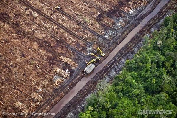 NGO Serukan Penyelamatan Hutan Indonesia dan Iklim Global