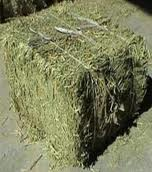 Alfalfa Hay Best Price