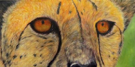 """""""Kito"""" , a cheetah portrait, close-up"""