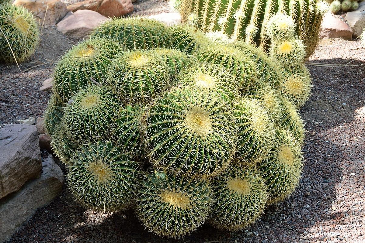 Tom and Margot's Adventures in Photography: Huerto del ... Baby Barrel Cactus