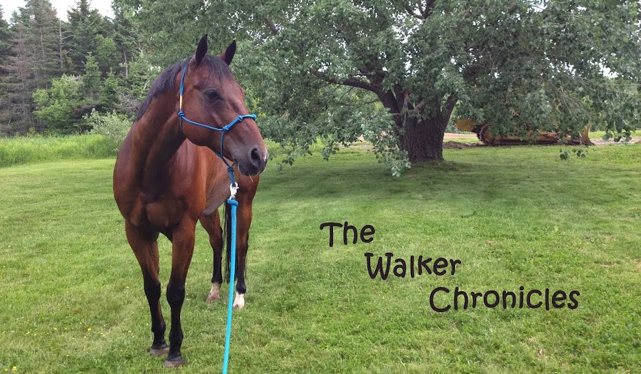 The Walker Chronicles