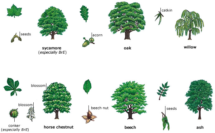 Expedition Earth The Difference Between Deciduous And