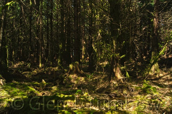 Gt imagery sunday in the forest of the oregon coast for Forest floor definition
