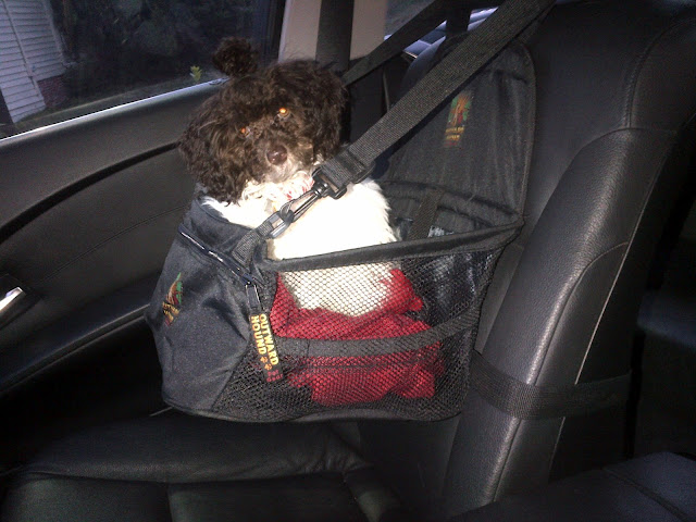 huxtable the poodle toy poodle blog parti poodle product review car seats for dogs small. Black Bedroom Furniture Sets. Home Design Ideas