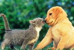 Los animales domésticos poseen un efecto positivo en la gente, ya que los miramos actuar con atenci