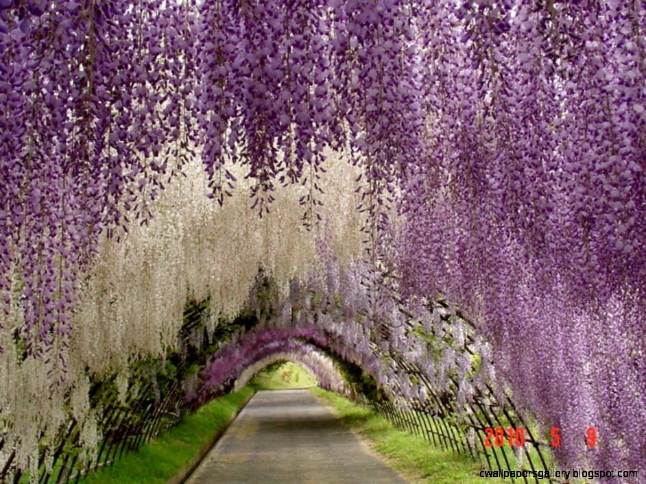 The hanging garden in Japan wallpapers and images   wallpapers