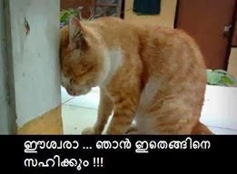 Funny images for Facebook Photo comments - engine sahikkum - cat