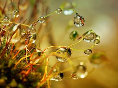 hình ảnh giọt sương đẹp lung linh