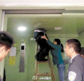 foto lucu Pencuri Gendut Nyangkut di Langit-langit Lift