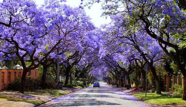 Purple tree tunnels 8 pic awesome pictures