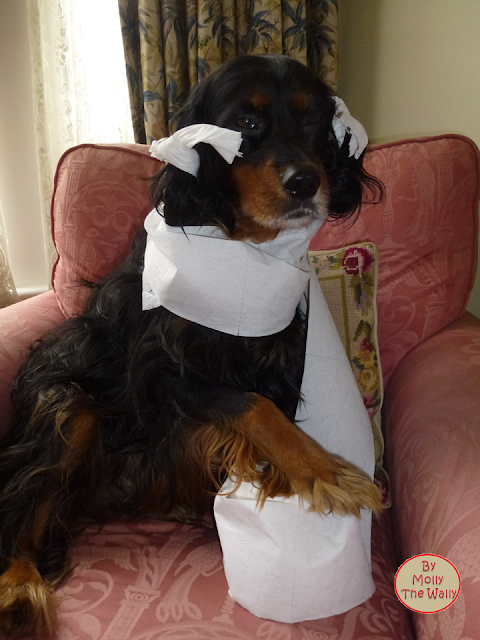 Molly The Wally Has Toilet Paper Issues!