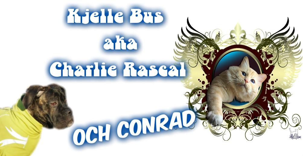 Kjelle Bus öden o äventyr