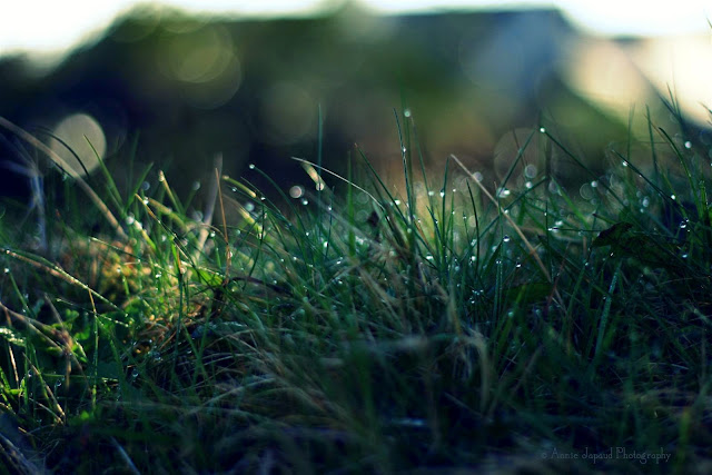 green grass and raindrops