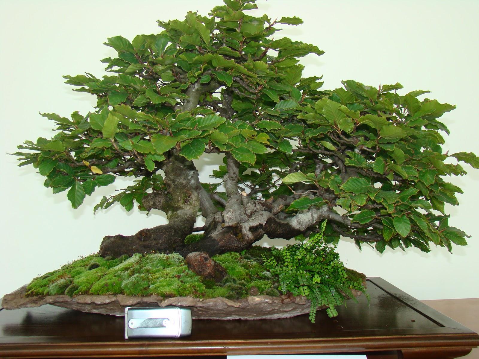 Tierra y agua bonsais en el centro niemeyer - Tierra para bonsais ...