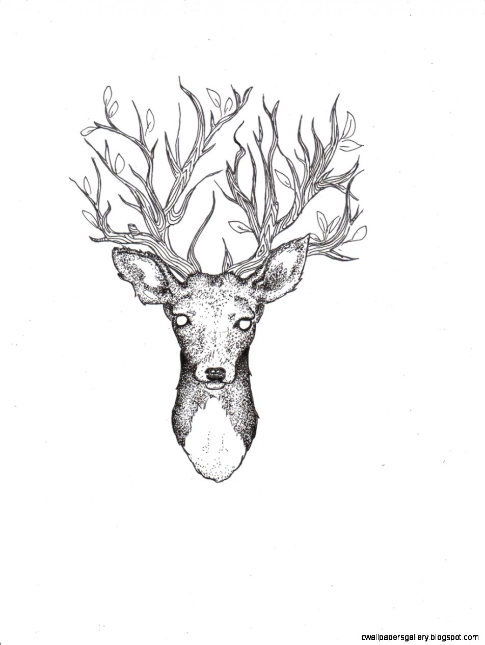 Line Drawing Wallpaper Uk : Deer drawing tumblr wallpapers gallery