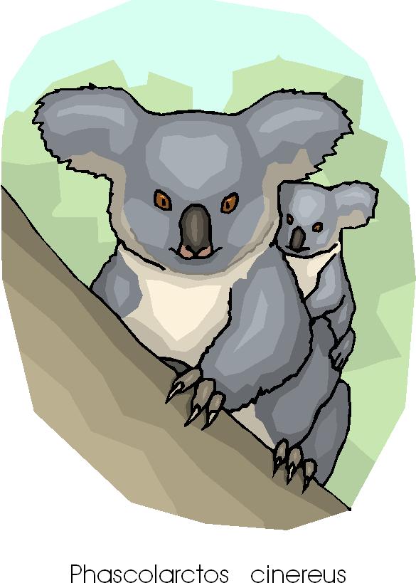 Funny Koala Free Clipart