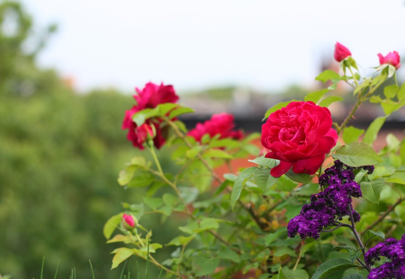 66 square feet plus garden advice for Garden consultant