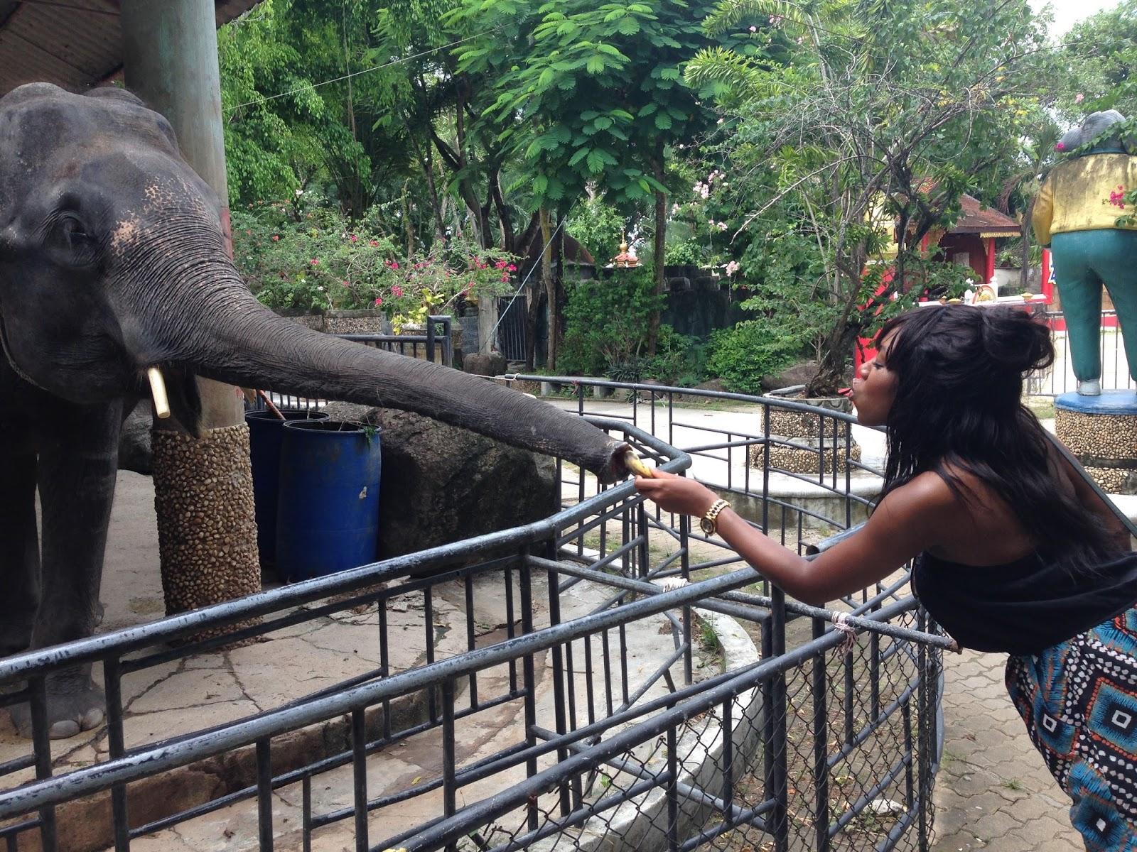 girl feeds elephant, elephant feeding thailand, elephant-trekking-thailand