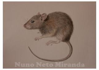 """alt=""""Mouse, aguarela cientifica"""""""