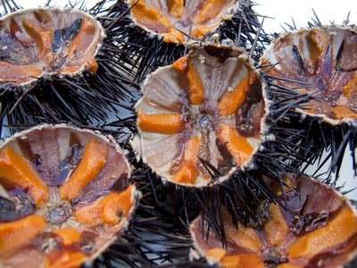 Vietnamese Sea Urchins2