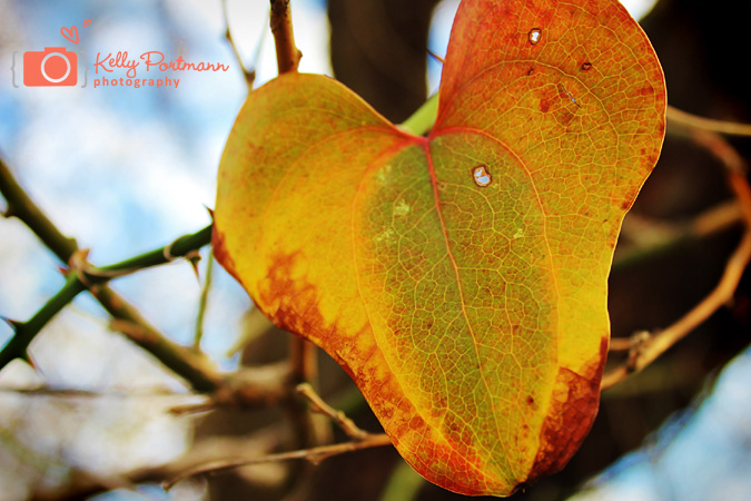Foliage, Nature Photography, RAW Artist, Kelly Portmann Photography