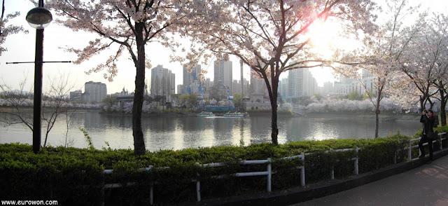 Lago Seokchon rodeado de cerezos en flor