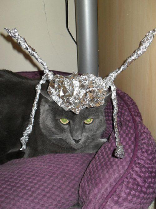 gambar kucing kelakar