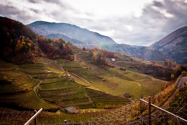 Wine region of Trentino