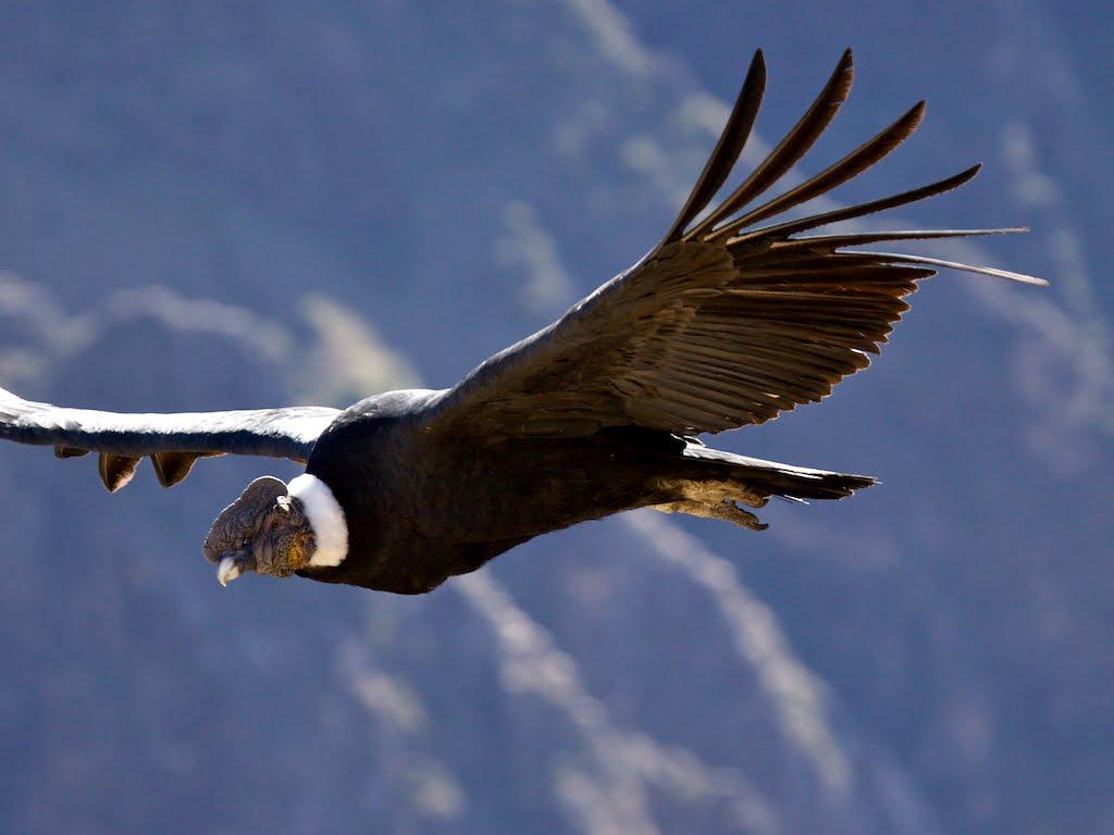 COLOMBIA!!! Condor