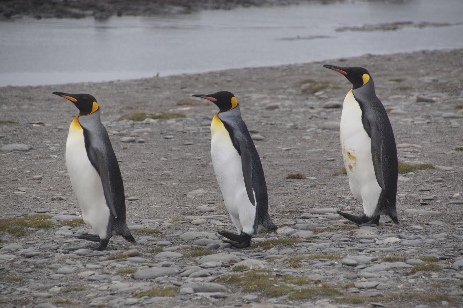 Argentinië, Falklandeilanden, Zuid Georgië en Antarctica