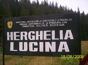 CAI HUTSULI-HERGHELIA LUCINA
