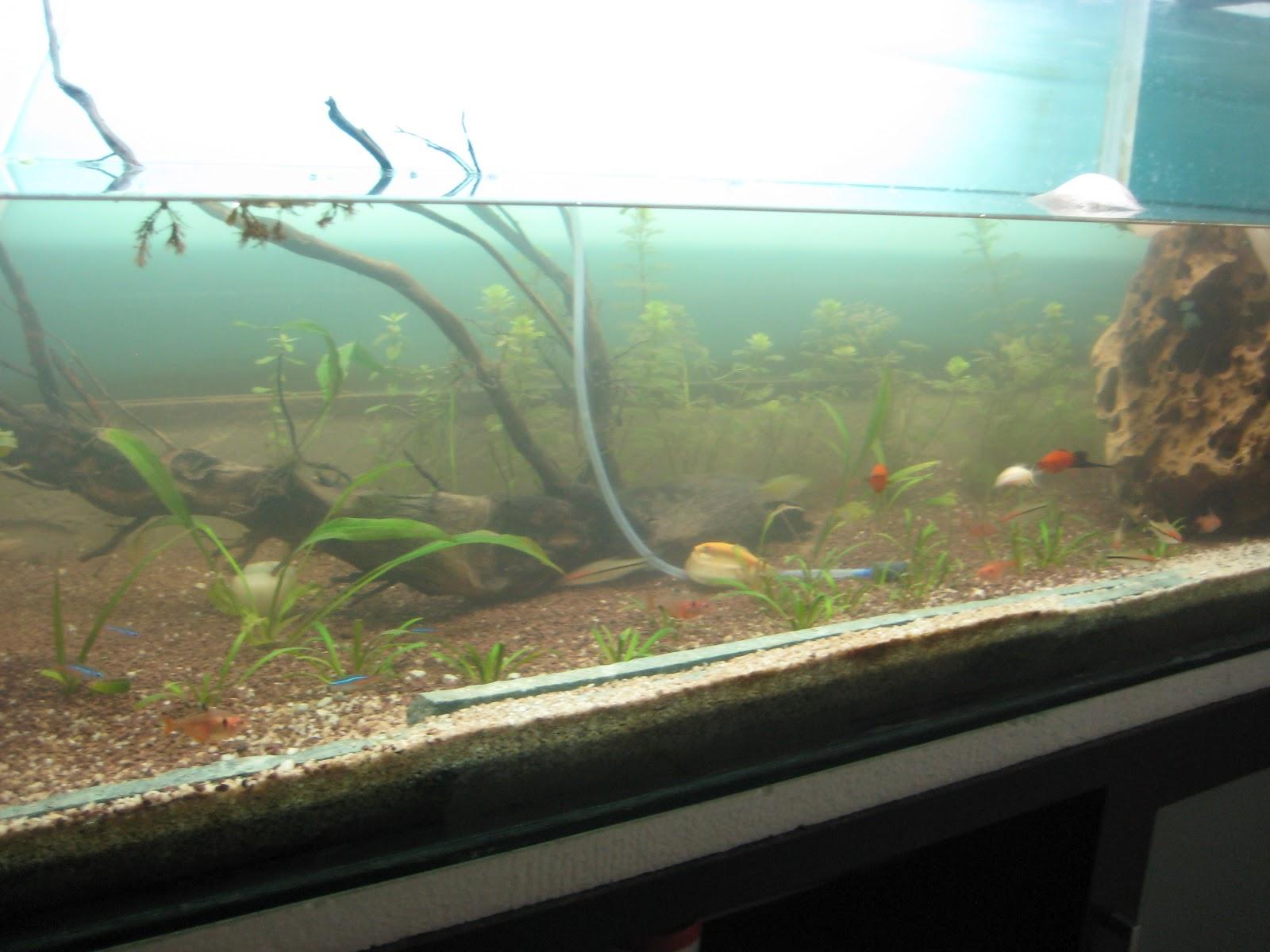 My fresh water aquarium natural planted tank walstad for Aquarium angle