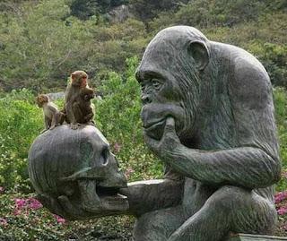 wajah lucu monyet ama orang utan