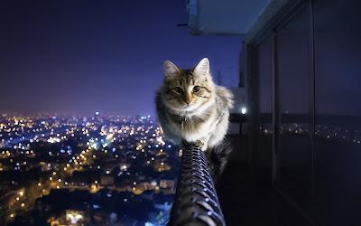 Un bonito gato en la terraza