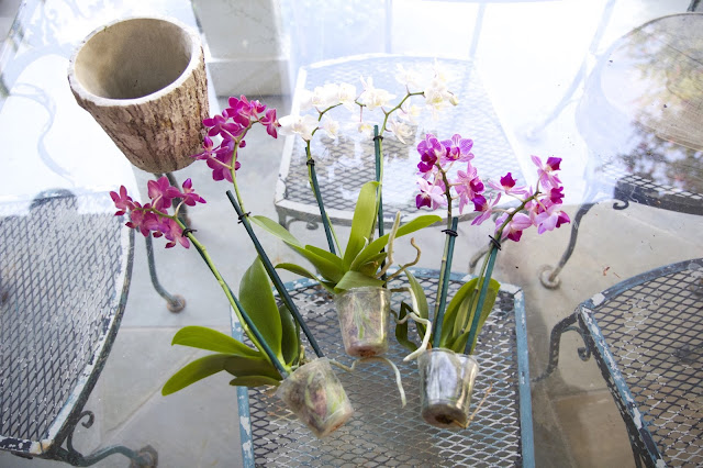 Small orchids in various colors; How to Landscape an Orchid; Nora's Nest