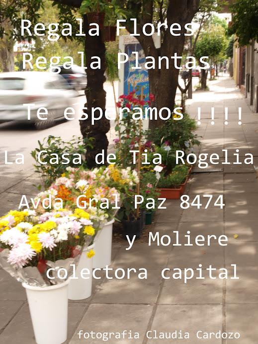 Plantas  y Flores para tu hogar